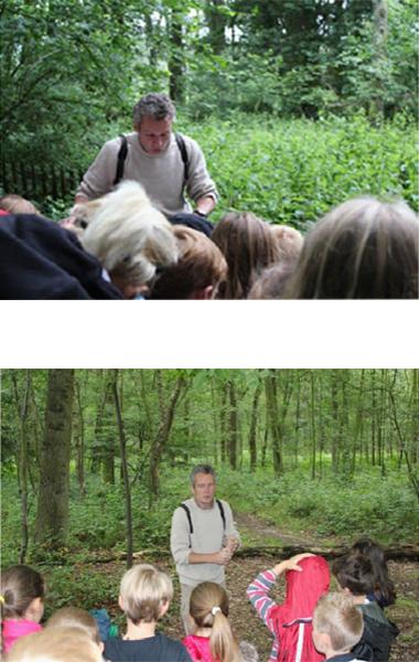 La découverte de la forêt